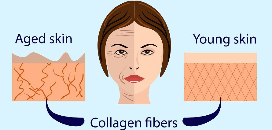aging skin need for collagen and how to prevent aging